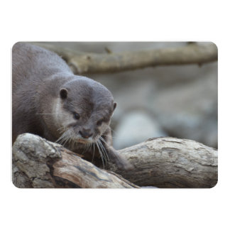 Adorable Otter Card