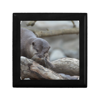 Adorable Otter Gift Box