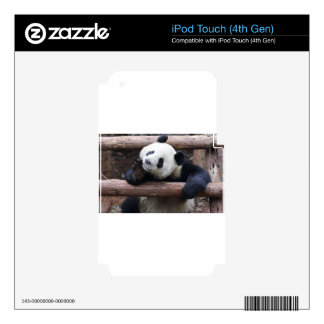 Adorable Panda Posing Skins For iPod Touch 4G