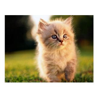 Adorable pare el gatito del movimiento postales