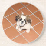 "Adorable Peke puppy Coaster<br><div class=""desc"">Peke puppy coaster</div>"