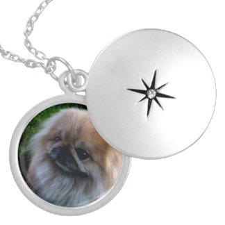 Adorable Pekingese Puppy Locket Necklace