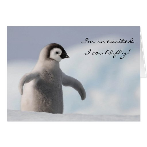 Adorable Penguin Birthday Card Greeting Cards