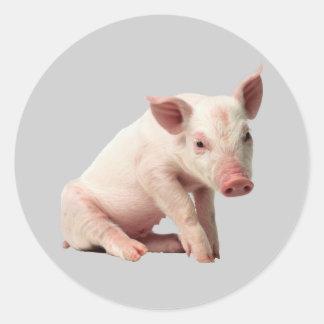 Adorable Piglet Sticker