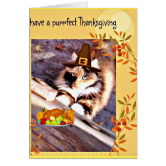 Adorable Pilgrim Cat Thanksgiving greeting card
