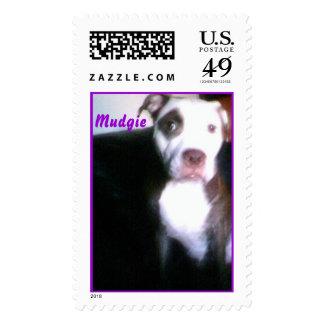Adorable Pitbull Postage Stamp