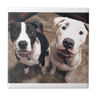 adorable pitbull puppies dogs ceramic tile