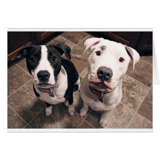 adorable pitbull puppies dogs greeting card