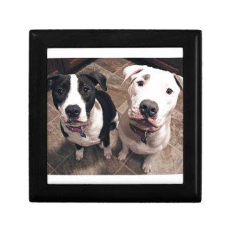 adorable pitbull puppies dogs jewelry box