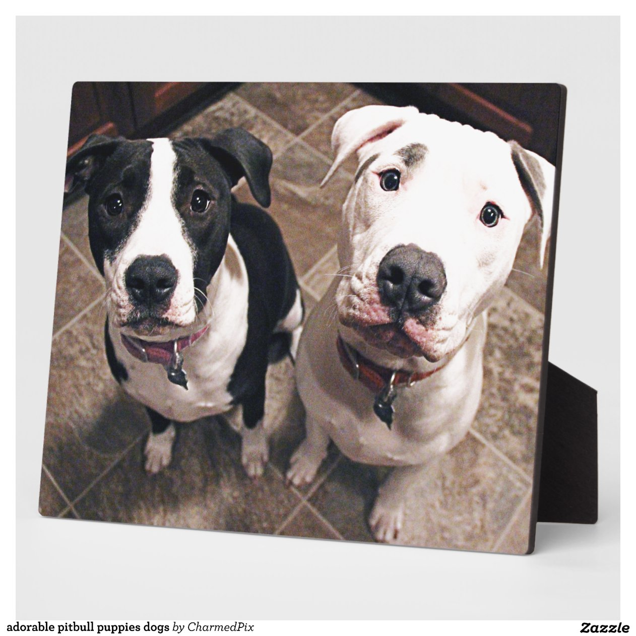Adorable Pitbull Puppies Dogs