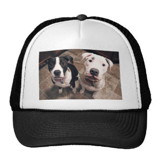 adorable pitbull puppies dogs trucker hat
