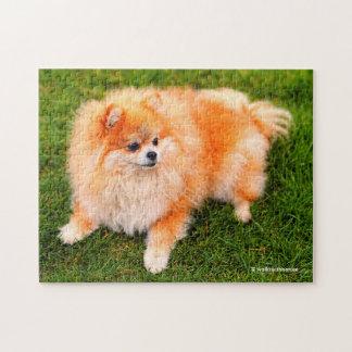 Adorable Pomeranian Puppy Jigsaw Puzzle