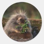 Adorable Porcupine Classic Round Sticker