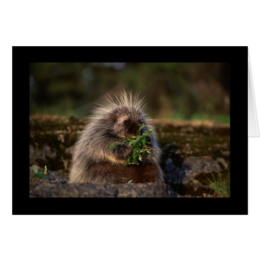 Adorable Porcupine Greeting Card