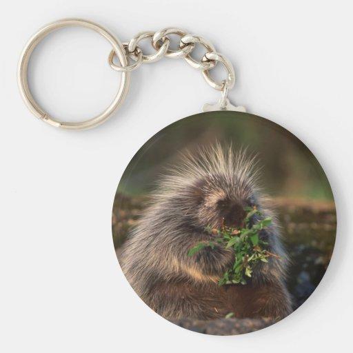 Adorable Porcupine Keychain