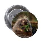 Adorable Porcupine Pins