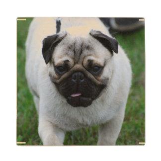 Adorable Pug Wood Coaster