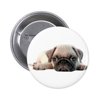 adorable pug puppy buttons