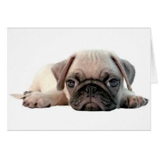 adorable pug puppy card
