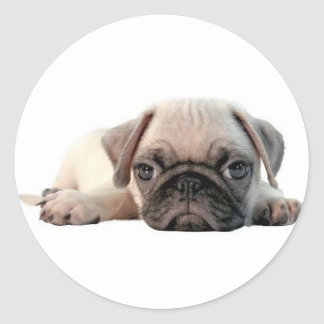 adorable pug puppy classic round sticker