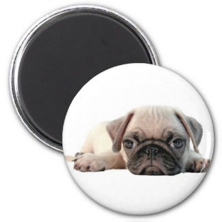 adorable pug puppy refrigerator magnet