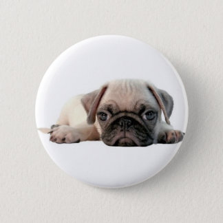 adorable pug puppy pinback button