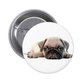 adorable pug puppy pinback button