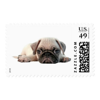 adorable pug puppy stamp