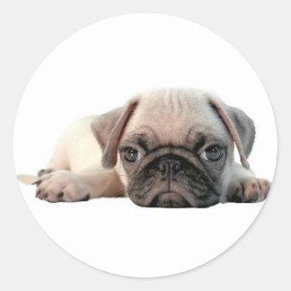 adorable pug puppy classic round sticker