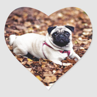 Adorable Pug Rests On The Autumn Foliage Heart Sticker
