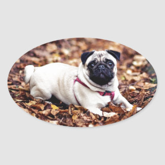 Adorable Pug Rests On The Autumn Foliage Oval Sticker