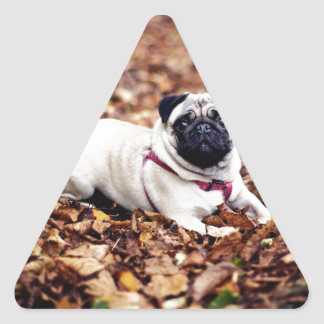 Adorable Pug Rests On The Autumn Foliage Triangle Sticker