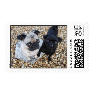 Adorable Pugs Postage
