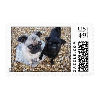 Adorable Pugs Postage Stamp