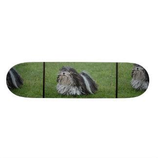 Adorable Puli Dog Skate Boards