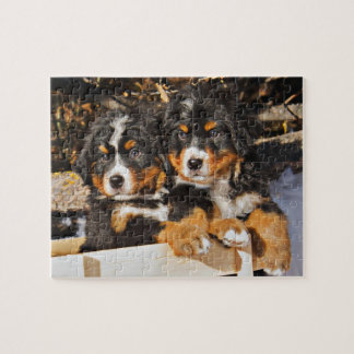 Adorable Puppies in Winter Jigsaw Puzzle