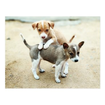 Adorable Puppies Playing on Beach Postcard