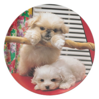 Adorable Puppy Bichon Frise Photo Plate