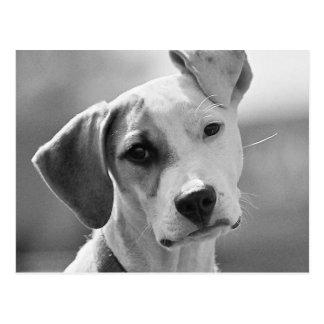 Adorable Puppy Dog Postcard