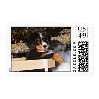 Adorable Puppy in a Sled Postage Stamp