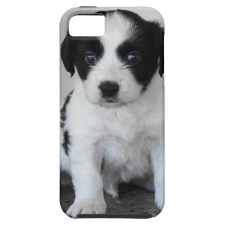 Adorable Puppy iPhone 5 Cases