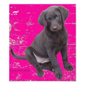 Adorable Puppy Photo Print