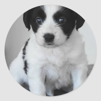 Adorable Puppy Classic Round Sticker