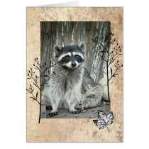 Adorable Raccoon