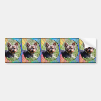 Adorable Radiant Yorky Mia greeting cards Bumper Sticker