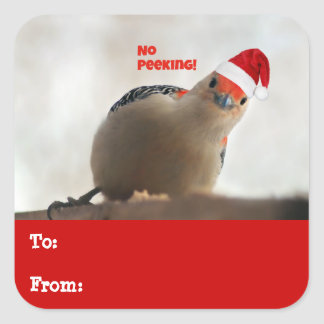 Adorable Red Bellied Woodpecker Holiday Gift Tags Square Sticker