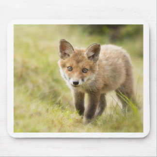 Adorable Red Fox Cub Mouse Pad