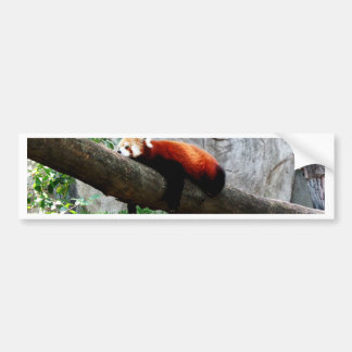 adorable red panda animal lazy funny bumper sticker