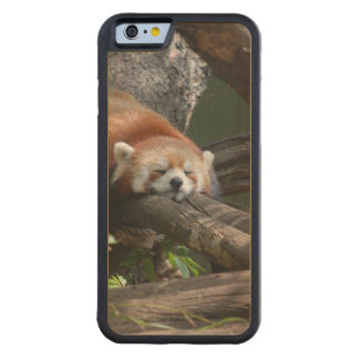 Adorable Red Panda Bear Carved Maple iPhone 6 Bumper Case