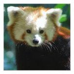 """Adorable Red Panda Invitations 5.25"""" Square Invitation Card"""